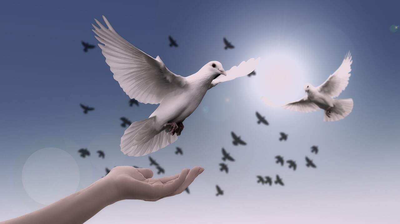 premiul pentru pace